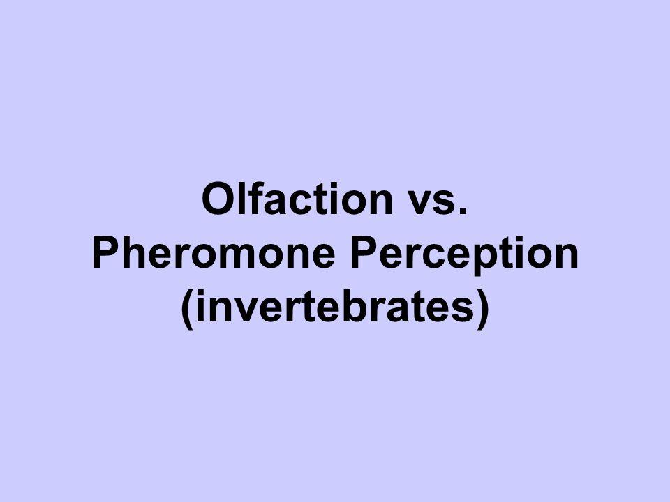Olfaction vs. Pheromone Perception (invertebrates)