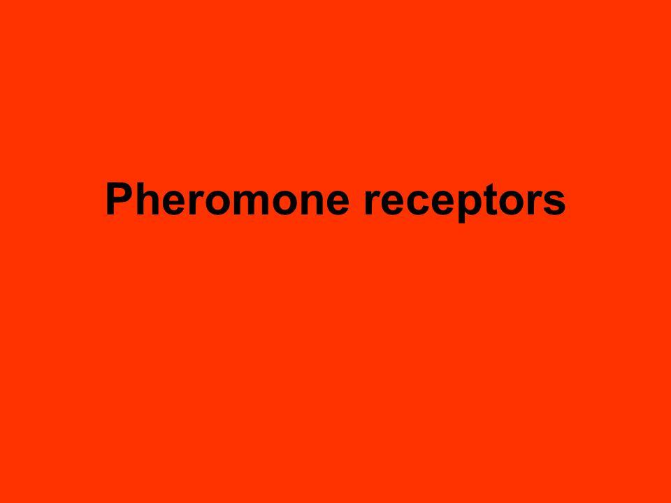 Pheromone receptors