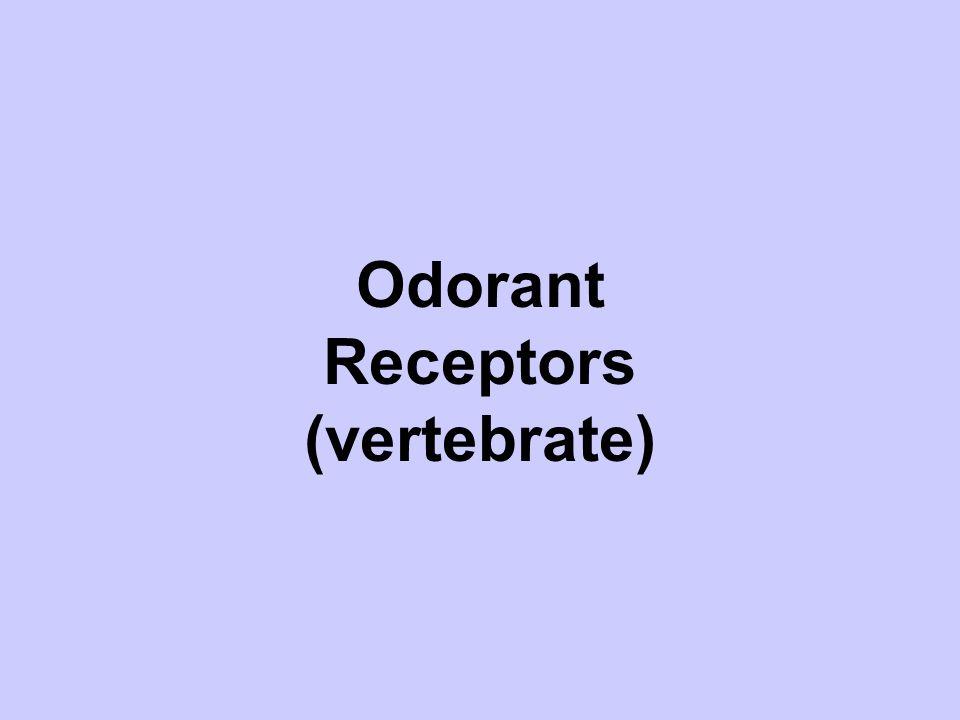 Odorant Receptors (vertebrate)