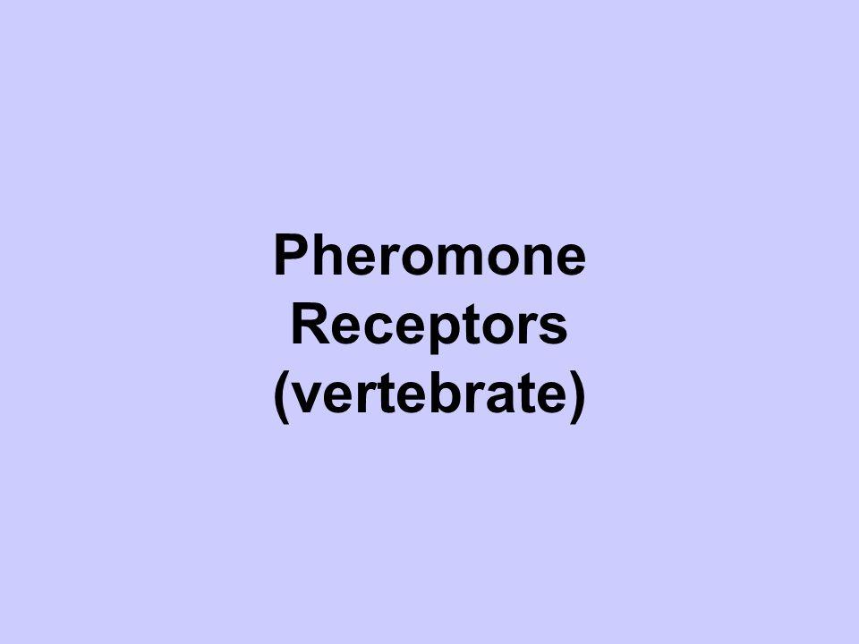 Pheromone Receptors (vertebrate)