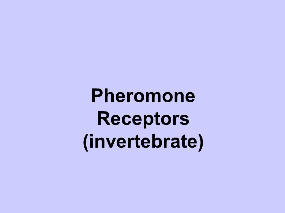 Pheromone Receptors (invertebrate)
