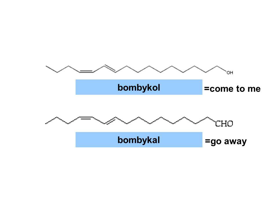 bombykol bombykal =come to me =go away