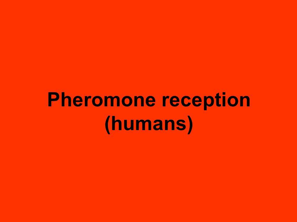 Pheromone reception (humans)