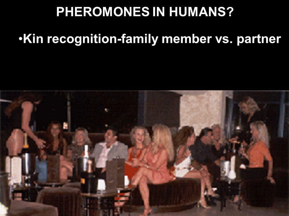PHEROMONES IN HUMANS? Kin recognition-family member vs. partner