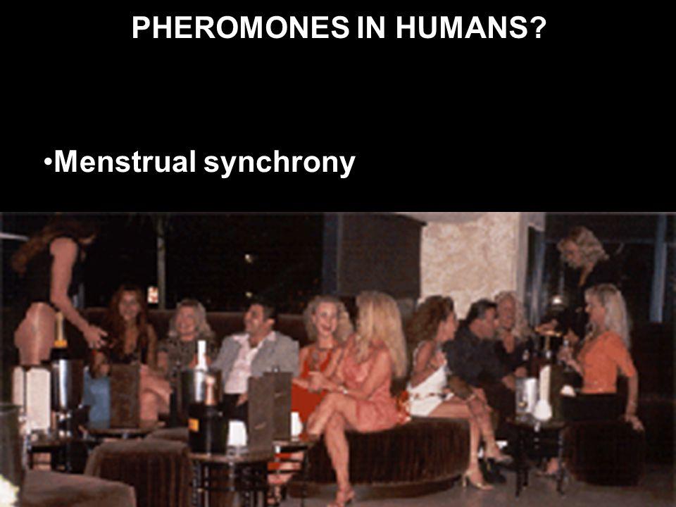 PHEROMONES IN HUMANS? Menstrual synchrony