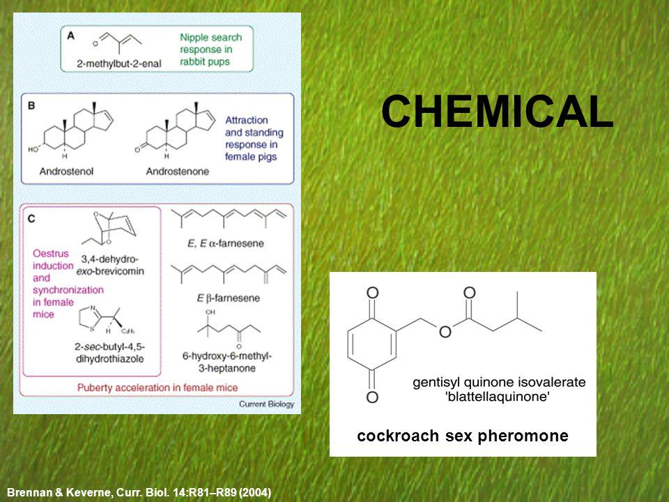 CHEMICAL cockroach sex pheromone Brennan & Keverne, Curr. Biol. 14:R81–R89 (2004)