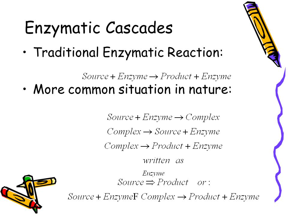 Enzymatic Cascades Traditional Enzymatic Reaction: More common situation in nature: