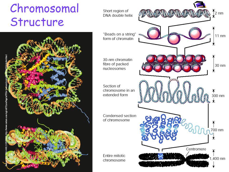 Chromosomal Structure Nature, 421:396-448 (1/23/2003).