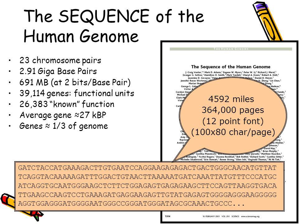 The SEQUENCE of the Human Genome 23 chromosome pairs 2.91 Giga Base Pairs 691 MB (at 2 bits/Base Pair) 39,114 genes: functional units 26,383 known function Average gene ≈27 kBP Genes ≈ 1/3 of genome GATCTACCATGAAAGACTTGTGAATCCAGGAAGAGAGACTGACTGGGCAACATGTTAT TCAGGTACAAAAAGATTTGGACTGTAACTTAAAAATGATCAAATTATGTTTCCCATGC ATCAGGTGCAATGGGAAGCTCTTCTGGAGAGTGAGAGAAGCTTCCAGTTAAGGTGACA TTGAAGCCAAGTCCTGAAAGATGAGGAAGAGTTGTATGAGAGTGGGGAGGGAAGGGGG AGGTGGAGGGATGGGGAATGGGCCGGGATGGGATAGCGCAAACTGCCC...