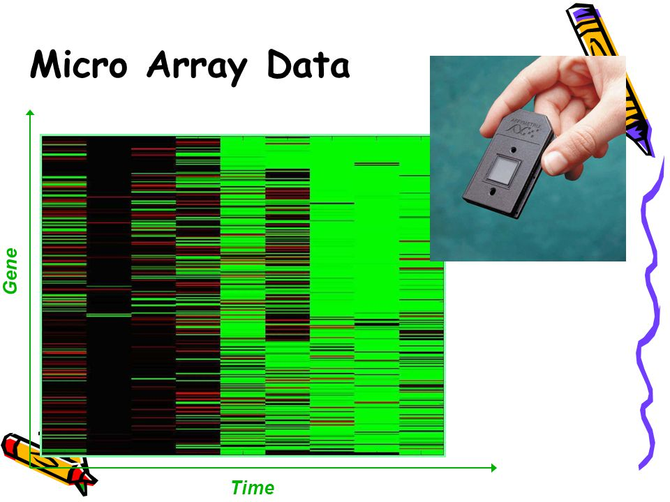 Micro Array Data Time Gene