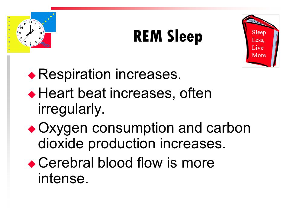 REM Sleep u Respiration increases. u Heart beat increases, often irregularly.
