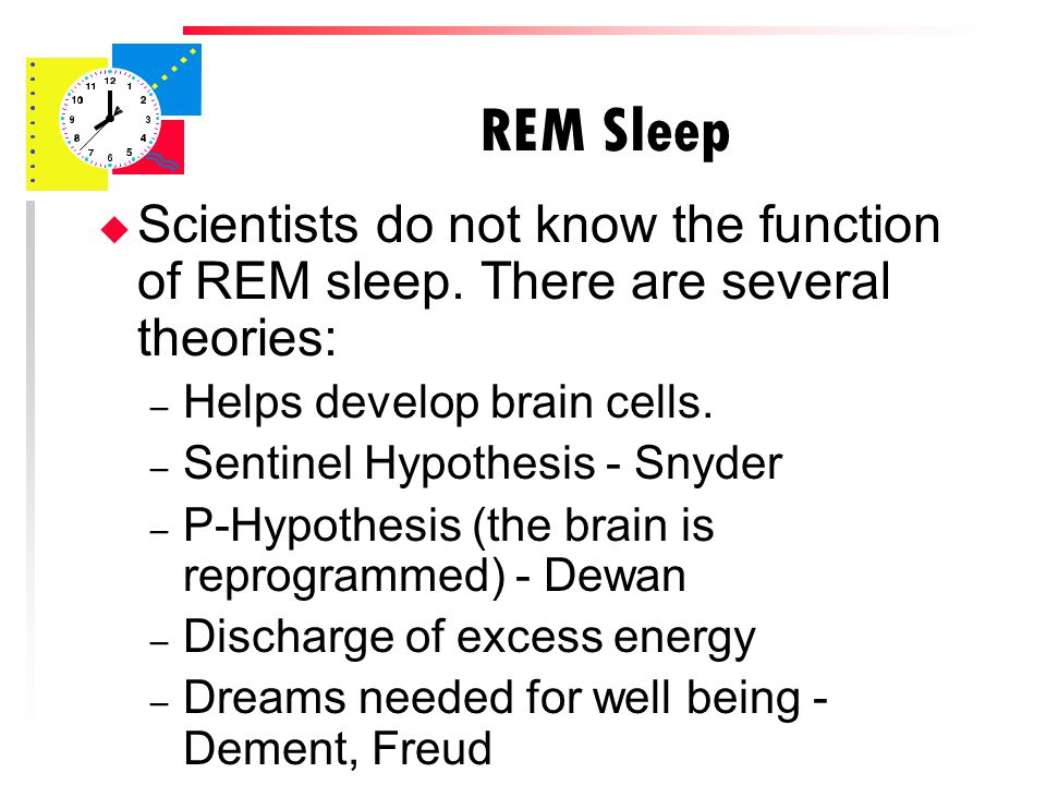 REM Sleep u Scientists do not know the function of REM sleep.