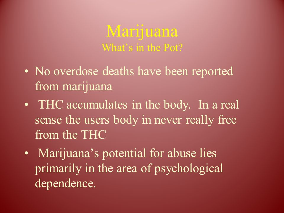 Marijuana What's in the Pot? No overdose deaths have been reported from marijuana THC accumulates in the body. In a real sense the users body in never