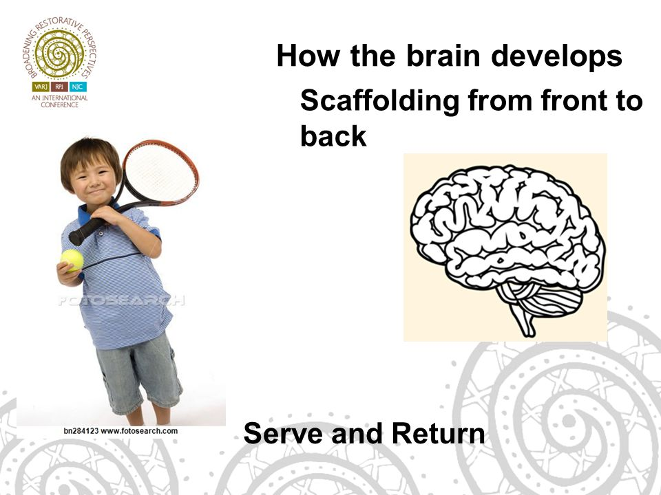 How the brain develops Scaffolding from front to back Serve and Return