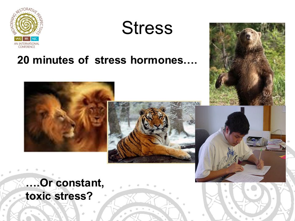 Stress 20 minutes of stress hormones…. ….Or constant, toxic stress