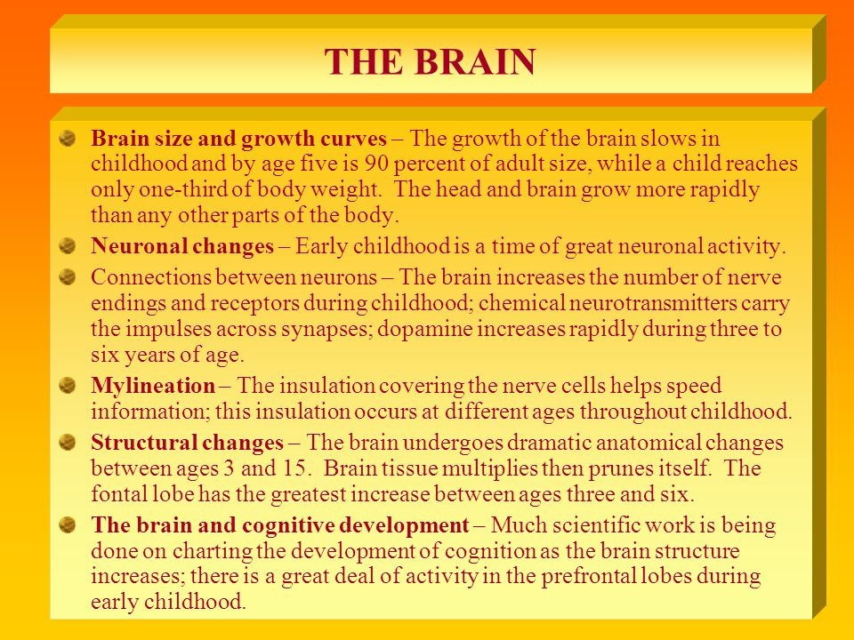 THE BRAIN Brain size and growth curves – The growth of the brain slows in childhood and by age five is 90 percent of adult size, while a child reaches only one-third of body weight.