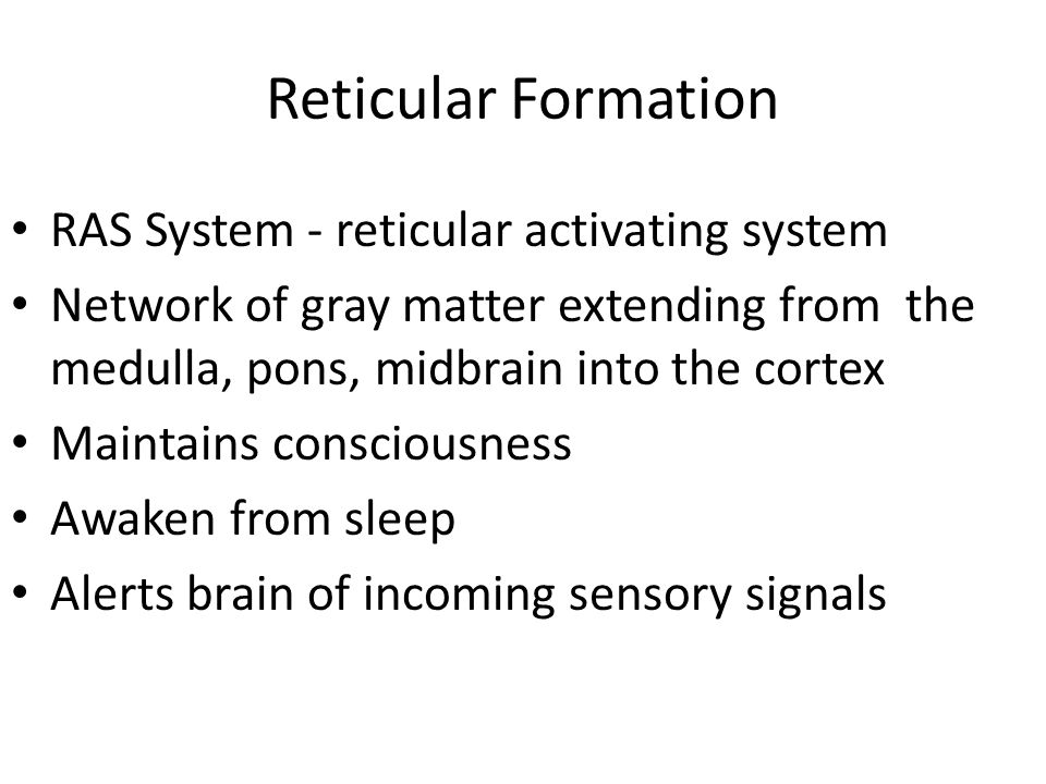 Reticular Formation RAS System - reticular activating system Network of gray matter extending from the medulla, pons, midbrain into the cortex Maintai