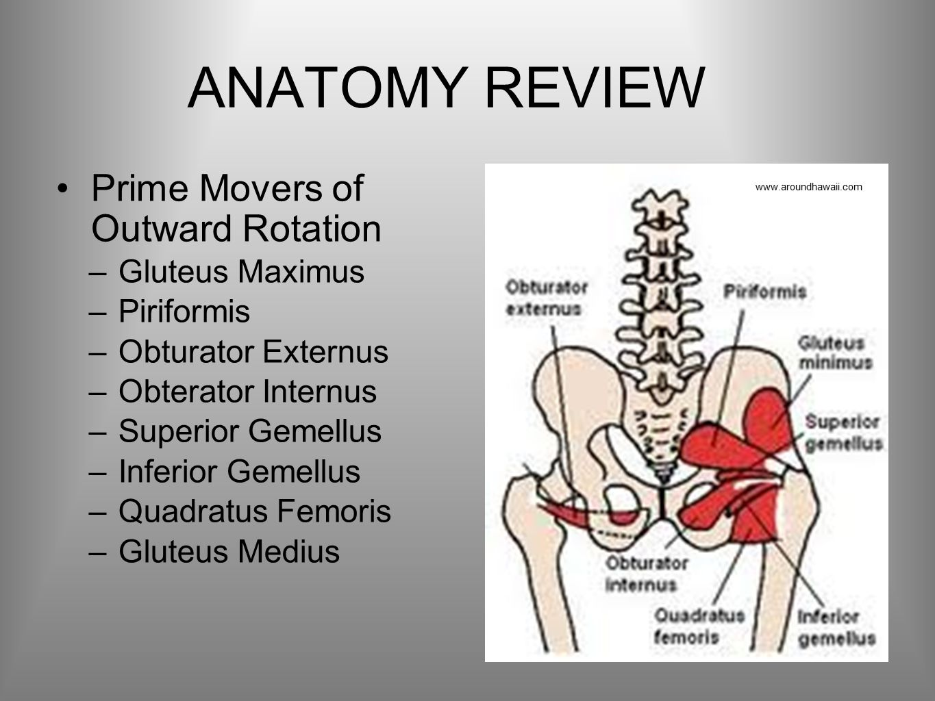 ANATOMY REVIEW Prime Movers of Outward Rotation –Gluteus Maximus –Piriformis –Obturator Externus –Obterator Internus –Superior Gemellus –Inferior Gemellus –Quadratus Femoris –Gluteus Medius www.aroundhawaii.com