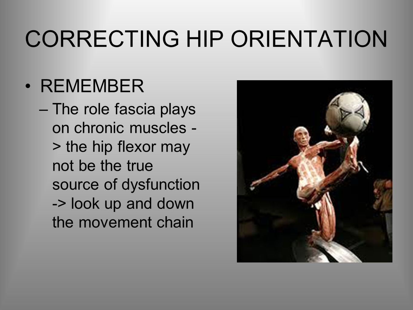 CORRECTING HIP ORIENTATION REMEMBER –The role fascia plays on chronic muscles - > the hip flexor may not be the true source of dysfunction -> look up and down the movement chain
