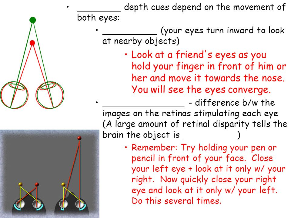 ________ depth cues depend on the movement of both eyes: __________ (your eyes turn inward to look at nearby objects) Look at a friend's eyes as you h