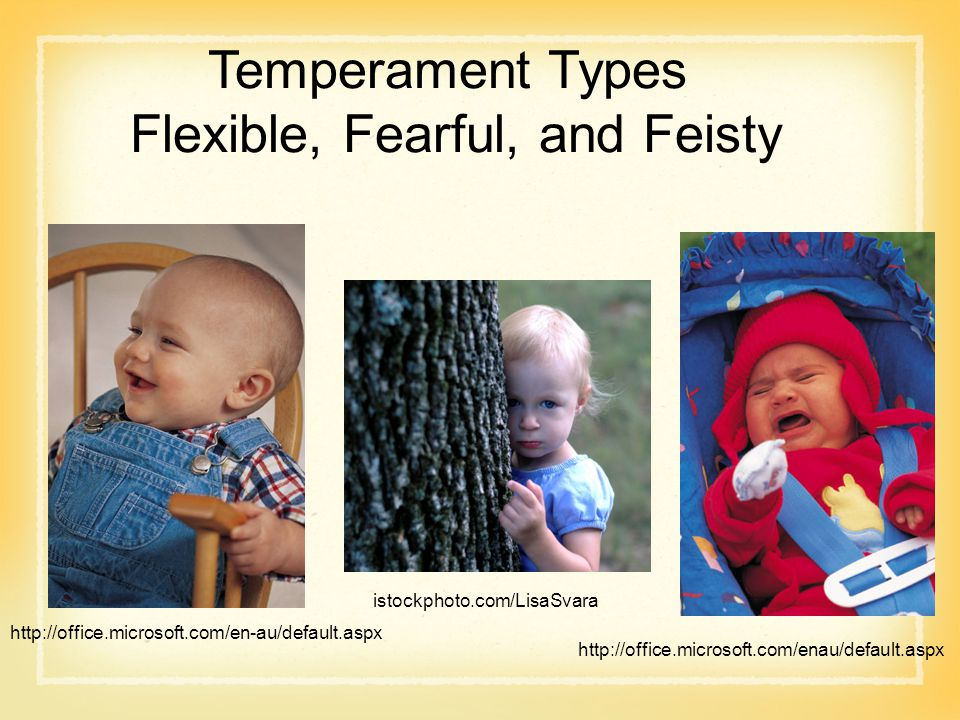 Temperament Types Flexible, Fearful, and Feisty istockphoto.com/LisaSvara http://office.microsoft.com/en-au/default.aspx http://office.microsoft.com/enau/default.aspx