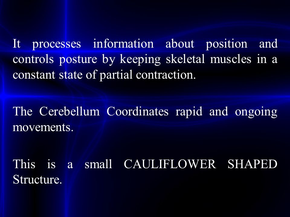 It processes information about position and controls posture by keeping skeletal muscles in a constant state of partial contraction. The Cerebellum Co