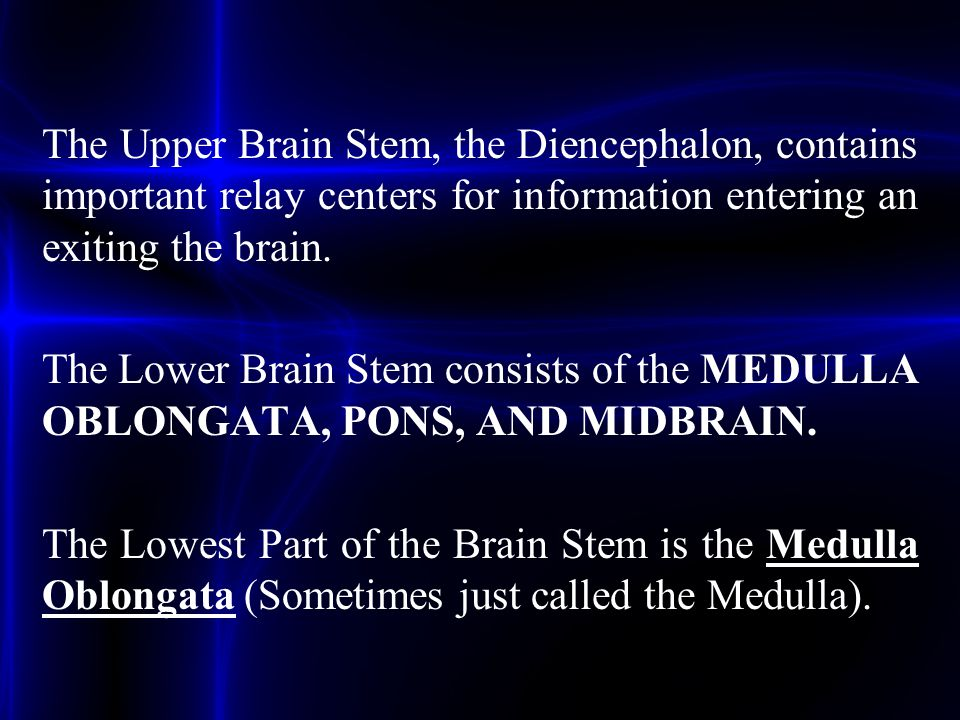 The Upper Brain Stem, the Diencephalon, contains important relay centers for information entering an exiting the brain. The Lower Brain Stem consists