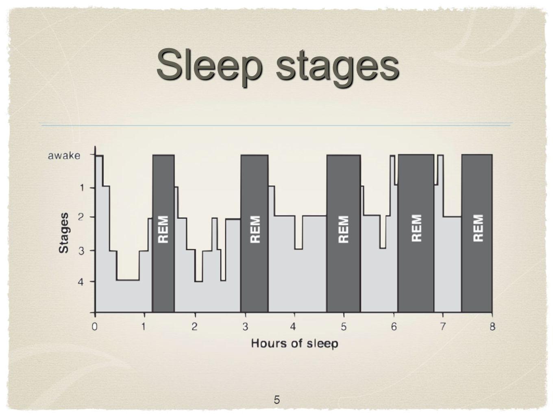 Sleep stages 5