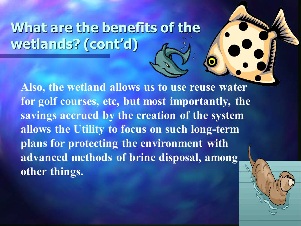 What are the benefits of the wetlands.