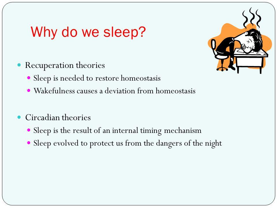 Why do we sleep? Recuperation theories Sleep is needed to restore homeostasis Wakefulness causes a deviation from homeostasis Circadian theories Sleep