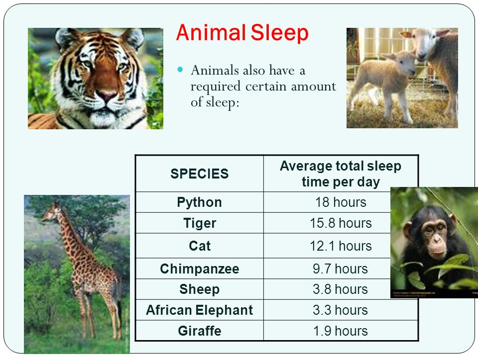 Animal Sleep SPECIES Average total sleep time per day Python18 hours Tiger15.8 hours Cat12.1 hours Chimpanzee9.7 hours Sheep3.8 hours African Elephant