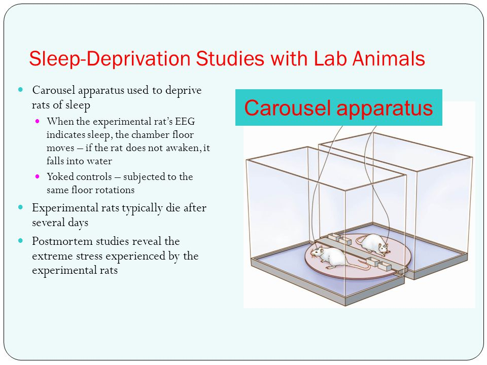 Sleep-Deprivation Studies with Lab Animals Carousel apparatus used to deprive rats of sleep When the experimental rat's EEG indicates sleep, the chamb