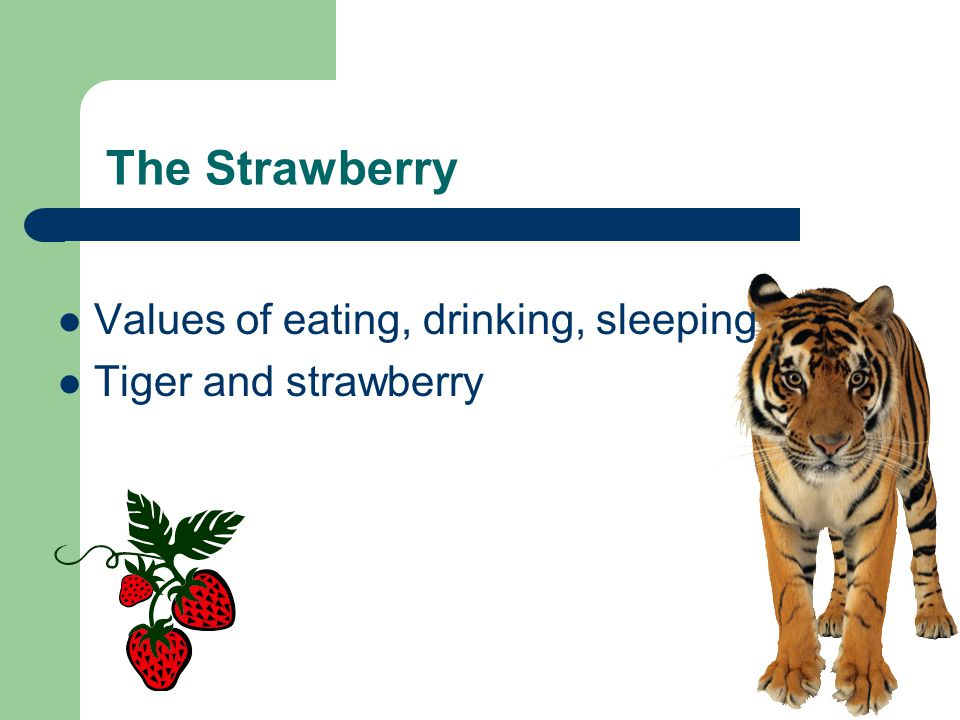 The Strawberry Values of eating, drinking, sleeping Tiger and strawberry