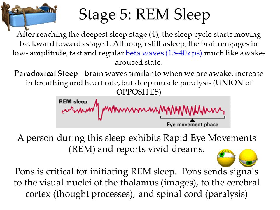 When WE REM We Dream Physiological Function: Dreams provide the sleeping brain with periodic stimulation to develop and preserve neural pathways.