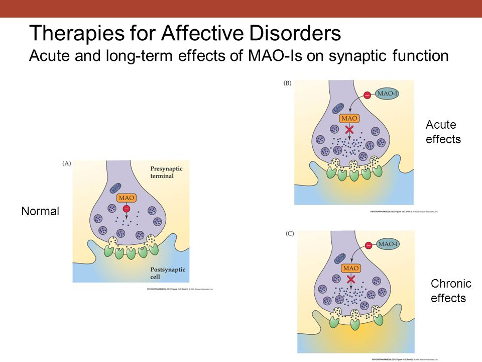 Therapies for Affective Disorders Acute and long-term effects of MAO-Is on synaptic function Acute effects Chronic effects Normal