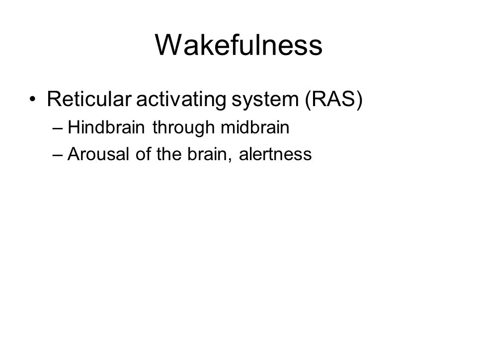 Wakefulness Reticular activating system (RAS) –Hindbrain through midbrain –Arousal of the brain, alertness