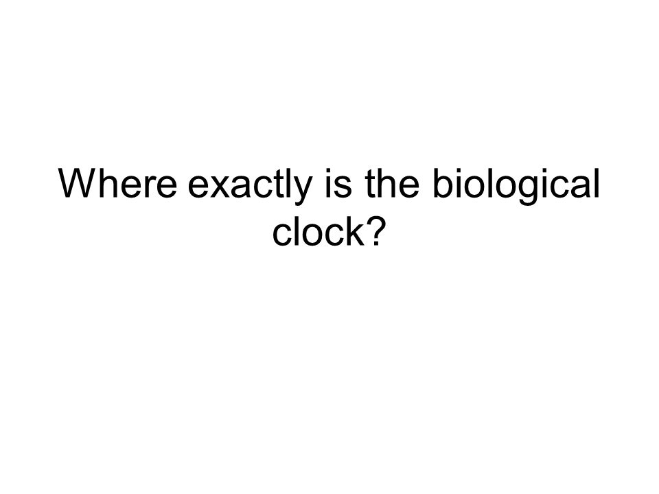Where exactly is the biological clock