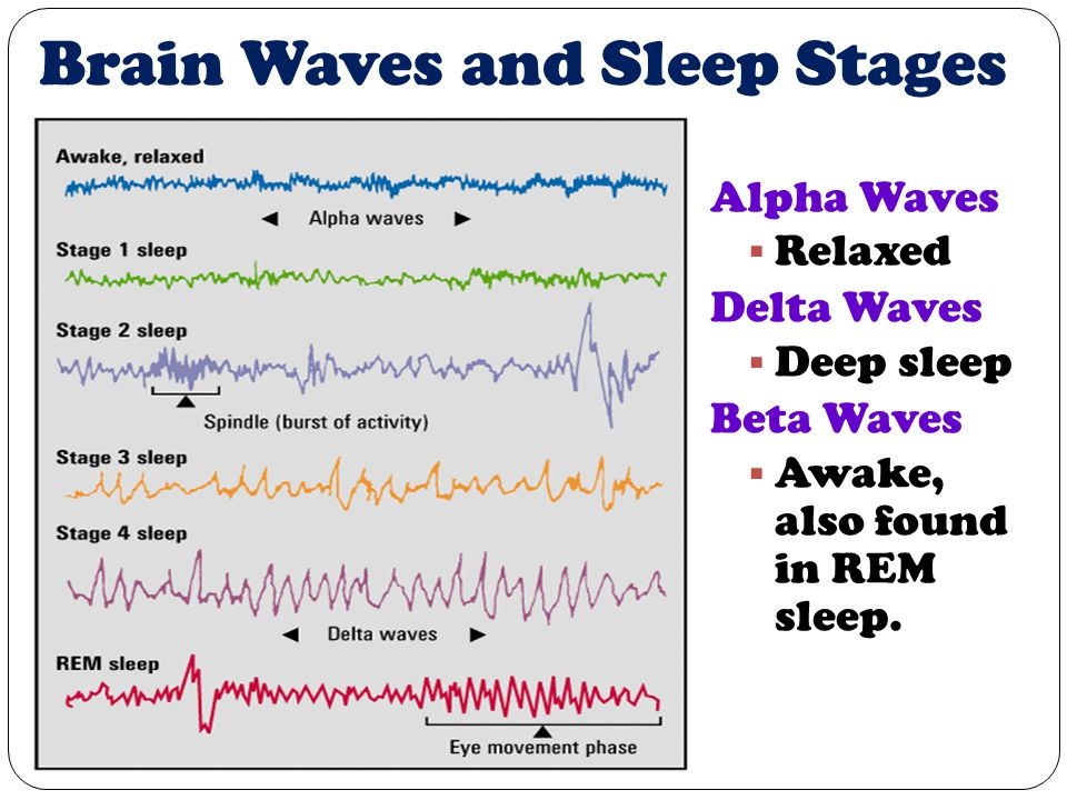 Brain Waves and Sleep Stages Alpha Waves  Relaxed Delta Waves  Deep sleep Beta Waves  Awake, also found in REM sleep.