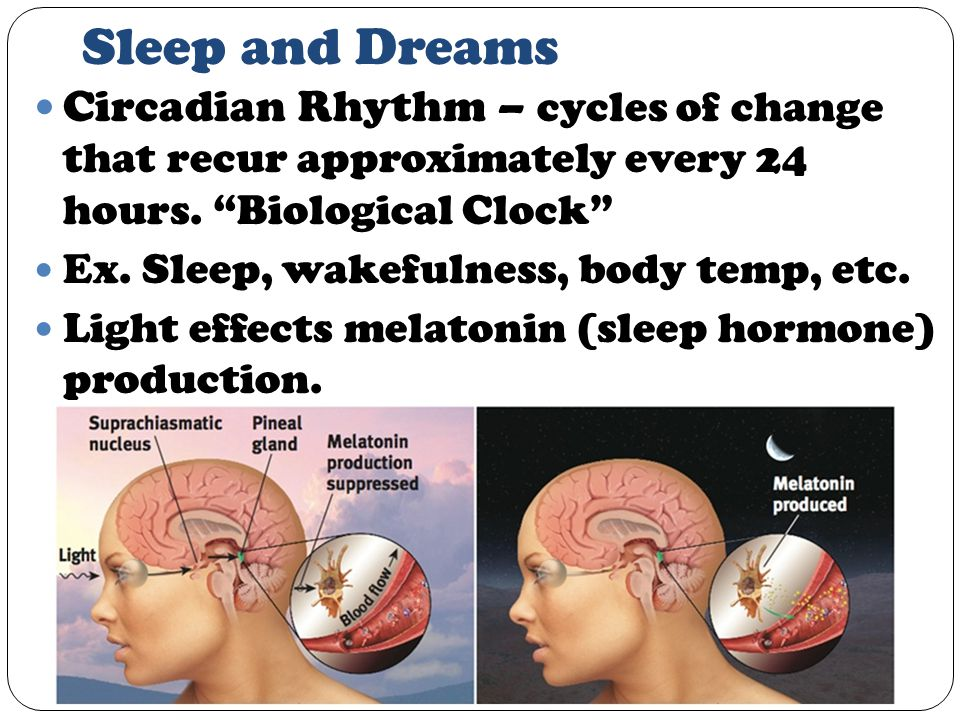 Sleep and Dreams Circadian Rhythm – cycles of change that recur approximately every 24 hours.