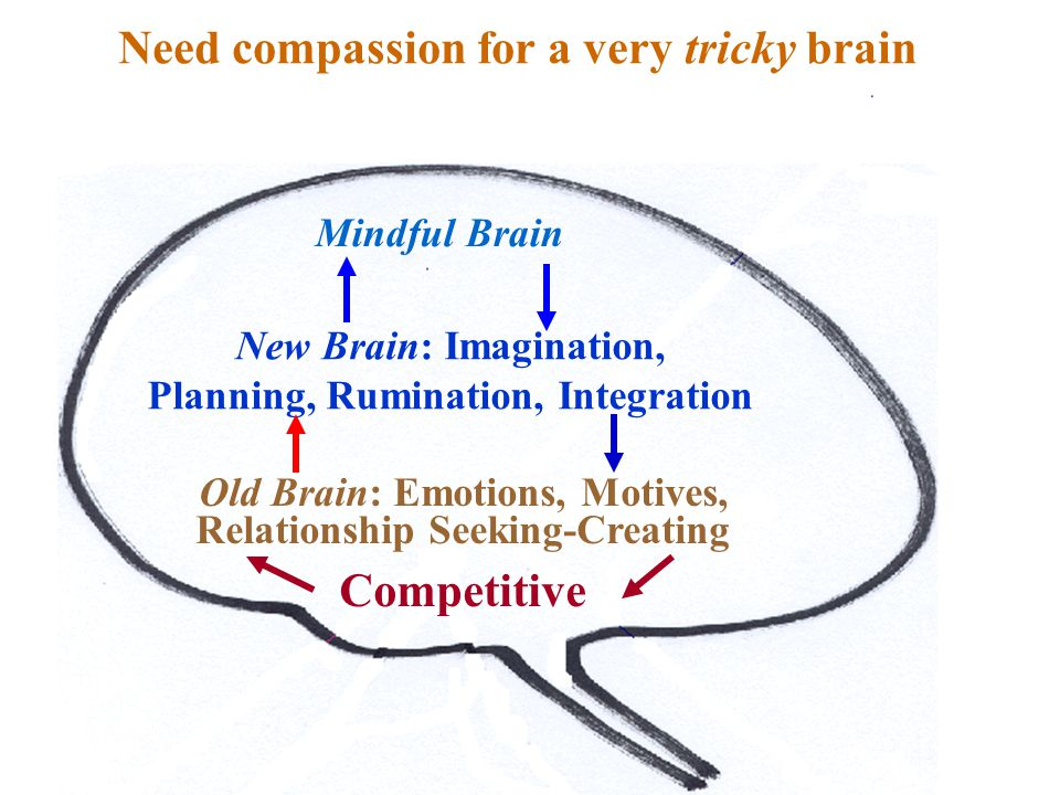 Sources of behaviour Old Brain: Emotions, Motives, Relationship Seeking-Creating Competitive New Brain: Imagination, Planning, Rumination, Integration Need compassion for a very tricky brain Mindful Brain