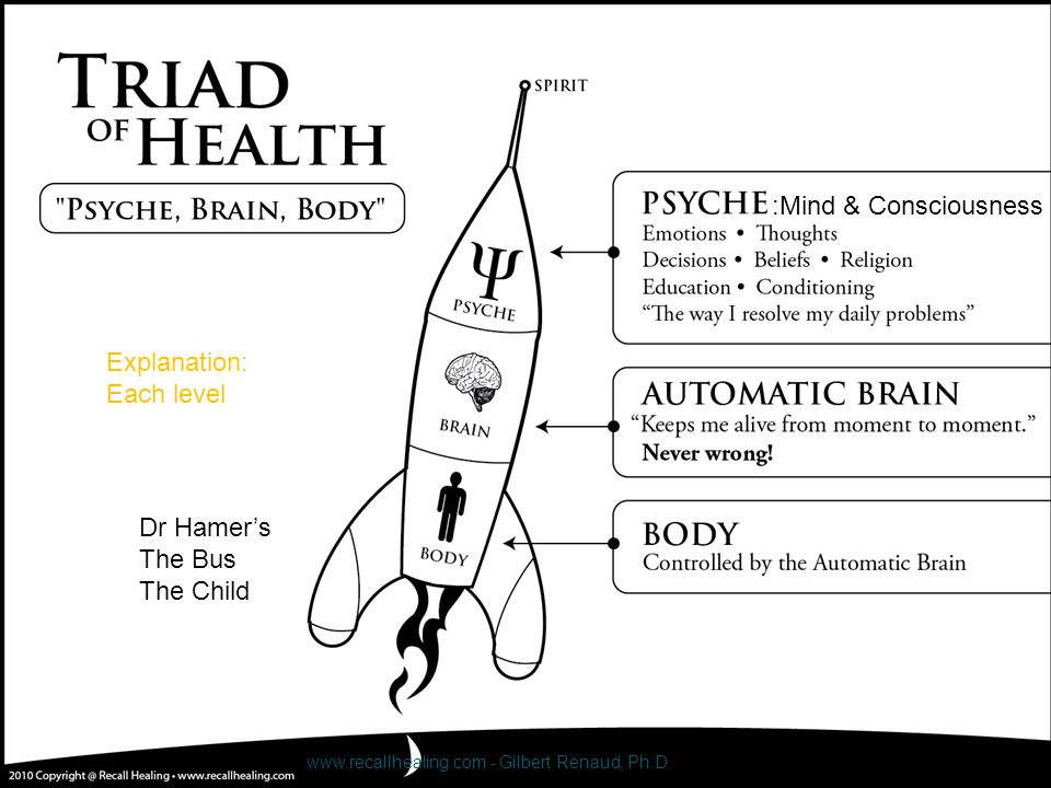 Explanation: Each level Dr Hamer's The Bus The Child www.recallhealing.com - Gilbert Renaud, Ph.D. :Mind & Consciousness