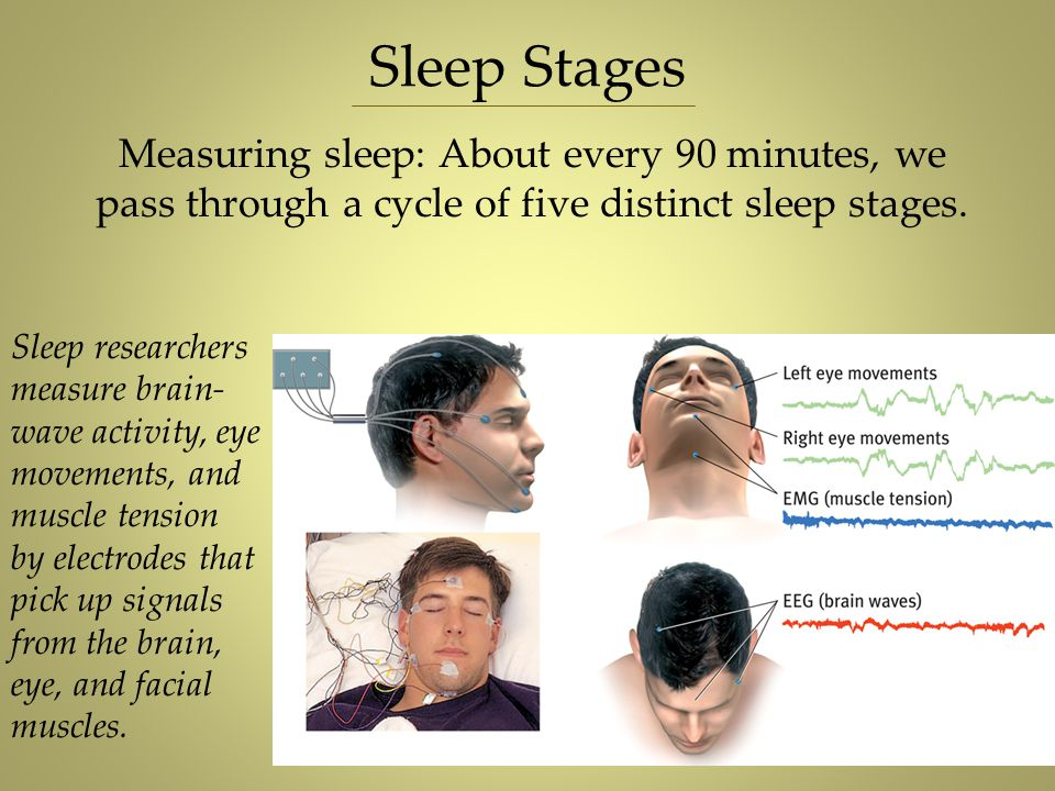 Measuring sleep: About every 90 minutes, we pass through a cycle of five distinct sleep stages. Sleep Stages Hank Morgan/ Rainbow Sleep researchers me