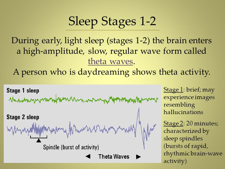 During early, light sleep (stages 1-2) the brain enters a high-amplitude, slow, regular wave form called theta waves. A person who is daydreaming show