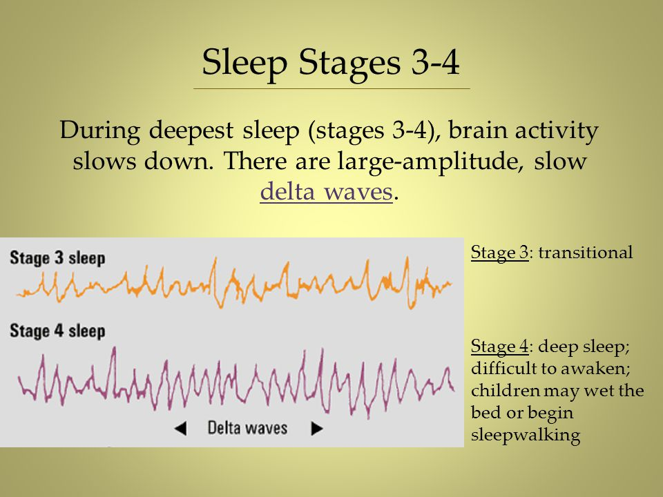 During deepest sleep (stages 3-4), brain activity slows down. There are large-amplitude, slow delta waves. Sleep Stages 3-4 Stage 3: transitional Stag
