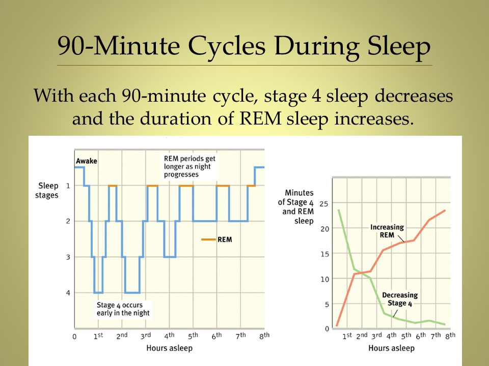 90-Minute Cycles During Sleep With each 90-minute cycle, stage 4 sleep decreases and the duration of REM sleep increases.