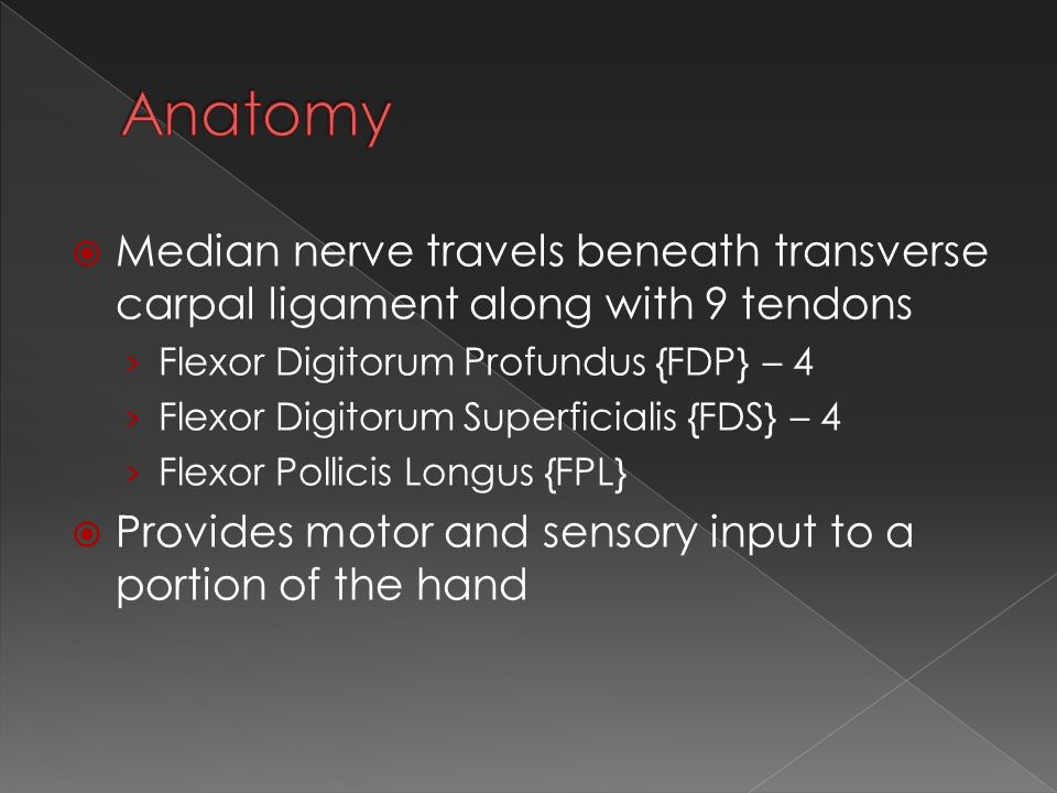  Median nerve travels beneath transverse carpal ligament along with 9 tendons › Flexor Digitorum Profundus {FDP} – 4 › Flexor Digitorum Superficialis