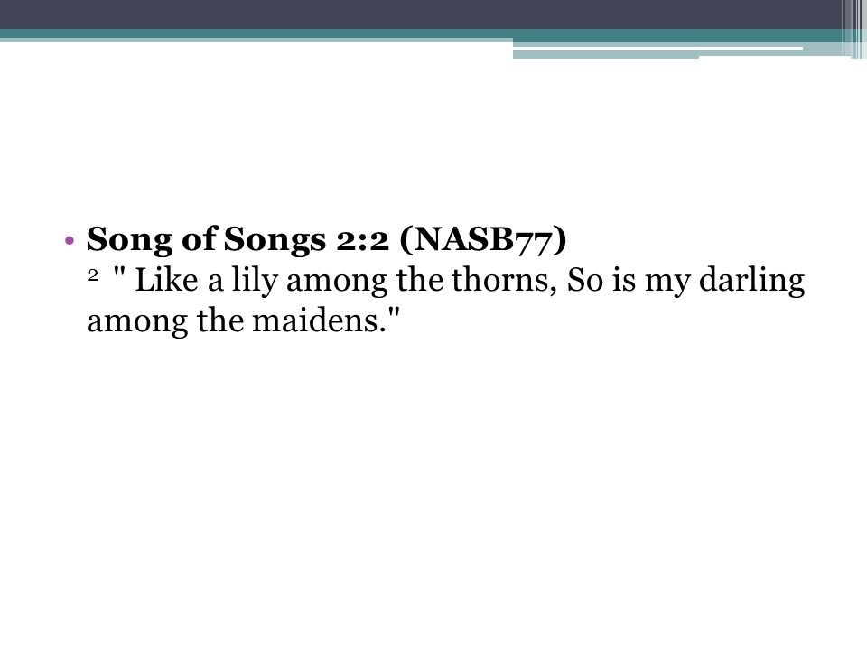 Song of Songs 2:2 (NASB77) 2 Like a lily among the thorns, So is my darling among the maidens.