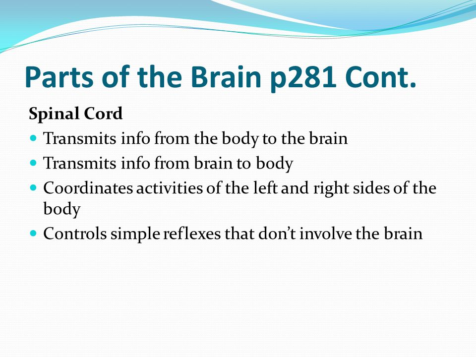 Parts of the Brain p281 Cont. Spinal Cord Transmits info from the body to the brain Transmits info from brain to body Coordinates activities of the le
