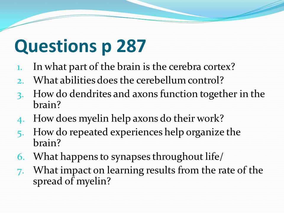 Questions p 287 1. In what part of the brain is the cerebra cortex? 2. What abilities does the cerebellum control? 3. How do dendrites and axons funct