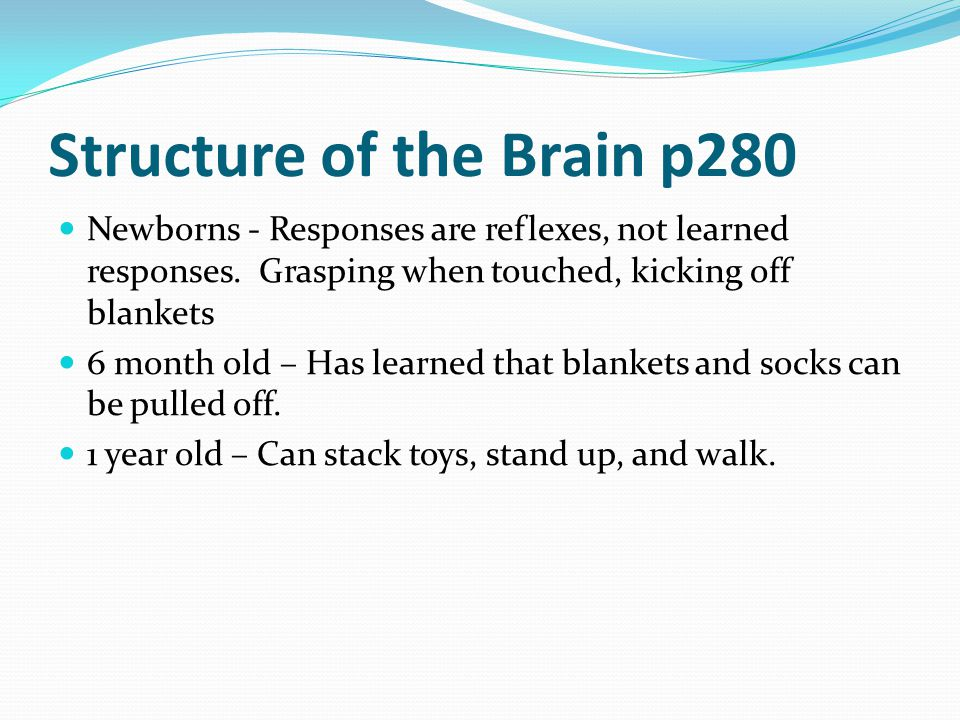 Structure of the Brain p280 Newborns - Responses are reflexes, not learned responses. Grasping when touched, kicking off blankets 6 month old – Has le